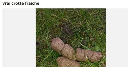 Le Bon Coin : une annonce amusante pour une crotte de chien !