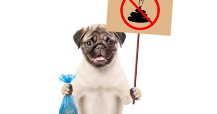Béziers : le #balancetacrotte lancé pour éradiquer les crottes de chiens