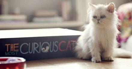 Le premier livre interactif pour chat vient de voir le jour, et vous allez vouloir vous l'offrir !