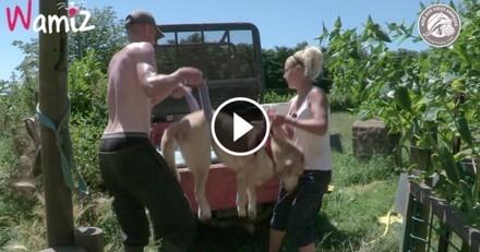 Les soigneurs de ce refuge sont aux petits soins pour ce vieux chien ! (Vidéo du jour)