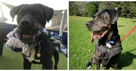 Après 8 ans dans sa famille, cette chienne est retournée dans le refuge où elle avait été adoptée