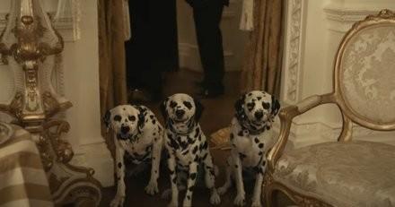 Cruella de retour au cinéma : l'association PETA lance une alerte au sujet des chiots Dalmatiens