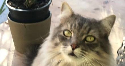 Gard : la pension lui rend un autre chat, le sien n'est plus là
