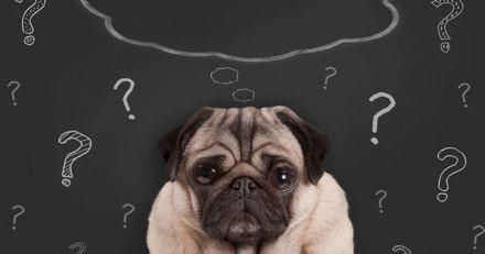 Démence chez le chien : 8 signes à surveiller de près !