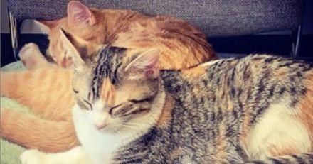 Cette entreprise a adopté deux chatons pour booster la bonne humeur des employés