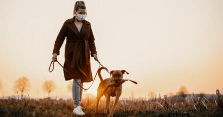 Confinement : bonne nouvelle pour les chiens, les promenades vont être plus longues dès ce 28 novembre !