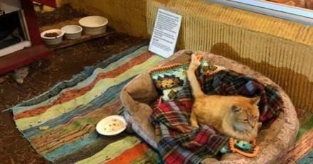 Un chat errant entre dans un restaurant : ce qui se passe 10 ans plus tard est à peine croyable