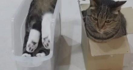 5 vidéos de chats dans un carton qui vont vous faire mourir de rire !
