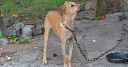 Contre la maltraitance, la ville de Detroit interdit d'enchaîner son chien dehors plus de 3h