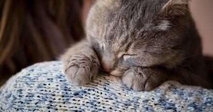 Comment surmonter la maladie et la mort de son animal ? Les réponses du Docteur Frantz Cappé, vétérinaire