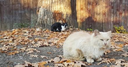 """Une femme est devenue """"chef des chats"""" dans une ville russe"""