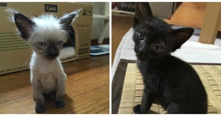 Minuscules et maigres ces chatons sont devenus de magnifiques chats bien poilus (Photos)