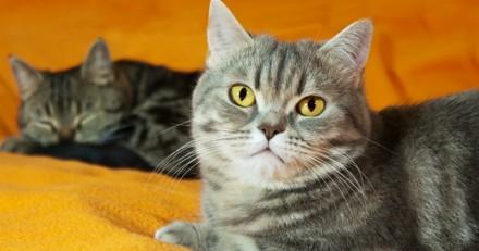 Est-ce une bonne idée d'avoir un deuxième chat à la maison ?