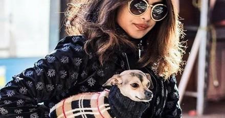 La chienne de Priyanka Chopra a du style !