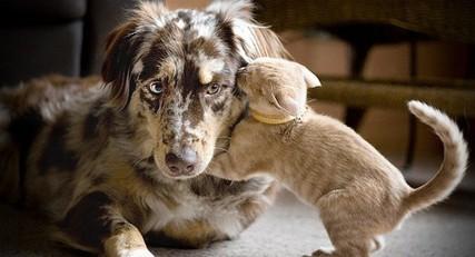 12 chats qui aiment les chiens et l'assument!