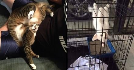 A se tordre de rire ! 21 chats dans des positions aussi drôles qu'insolites