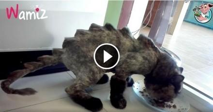 Il transforme son chat en dinosaure et s'attire les foudres du Web