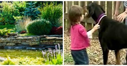 Elle voit son chien attraper violemment son bébé par la couche, se précipite et a le choc de sa vie