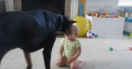L'immense Dobermann s'approche du bébé : la maman arrive en courant et reste sans voix (Vidéo)