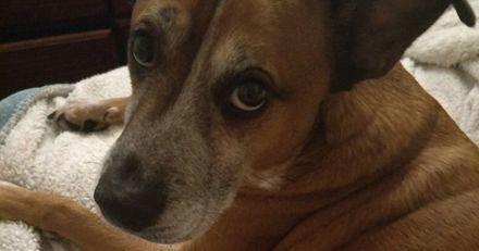 Ce chien maltraité et alcoolique a réussi à arrêter l'alcool grâce à son nouveau maître