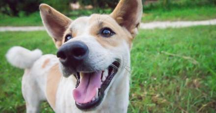 Idée de sortie avec votre chien ce week-end : la fête de « l'animal en ville » à Boulogne-Billancourt !