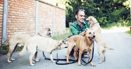 Où coûte-t-il le moins cher de faire garder son chien en France ?