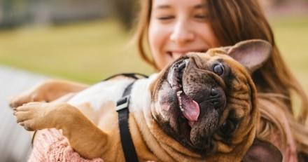 Dog-sitting : tout ce qu'il faut savoir avant de garder un chien