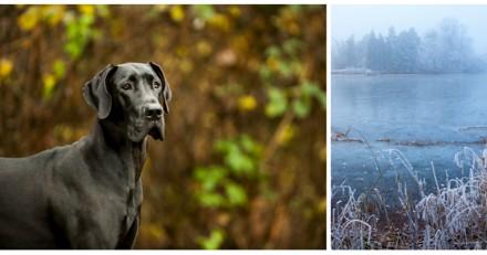 Elle voit un chien agir de façon bizarre et trainer quelque chose, quand elle s'approche c'est le choc