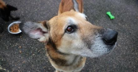 Découverte bouleversante devant le refuge : en regardant le cou du chien, tout le monde a la gorge serrée