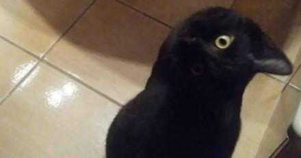 Voyez-vous un chat ou un corbeau ? Voici la photo qui rend tout le monde totalement fou !