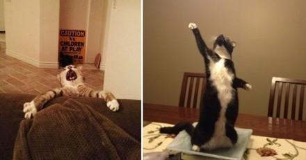 20 preuves que les chats sont d'excellents comédiens