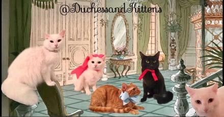 Ils appellent leur chatte Duchesse et elle donne naissance aux chatons des Aristochats !