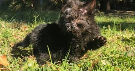 Appelé en renfort, le vétérinaire est frappé de stupeur quand il observe la tête du chaton
