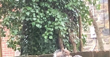 Il passe devant la clôture de son voisin : en jetant un oeil, il ne peut s'empêcher de photographier ce qu'il voit