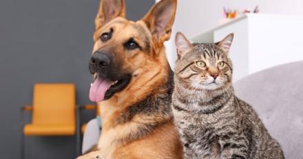 Selon une étude, les chats restent majoritairement donnés ou trouvés alors que les chiens sont achetés