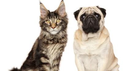 Voilà pourquoi les chiens sont plus appréciés que les chats (et c'est la science qui le dit) !
