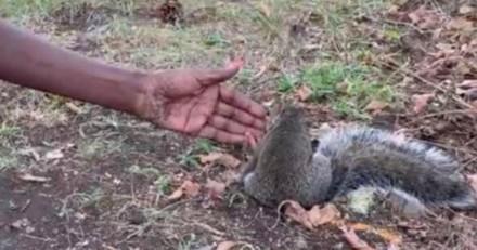 Un écureuil se met à la suivre : quand elle découvre ce qu'il voulait lui montrer, elle est bouleversée