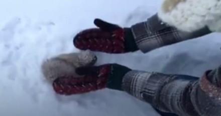 Ils voient une boule de poils dans la neige, s'approchent et courent chercher de l'aide (Vidéo du jour)