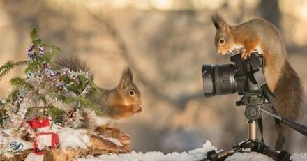 Quand des écureuils préparent Noël, ça donne ça… et c'est magnifique!