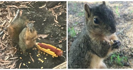 Cet écureuil pas comme les autres rend tous les jours visite à une personne très spéciale