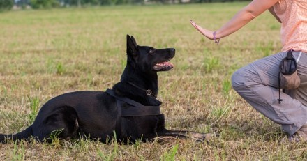 Existe-t-il une méthode simple et efficace pour éduquer mon chien ?