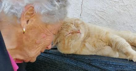 Elle perd son chat dans un tremblement de terre : 4 ans après, cette mamie fait pleurer le monde entier