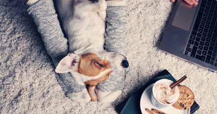 Emprunte Mon Toutou : un site pour emprunter un chien et rendre service en se faisant plaisir !