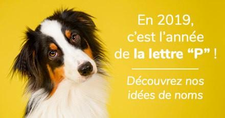 Nom de chien commençant par la lettre P : notre sélection pour l'année 2019 !