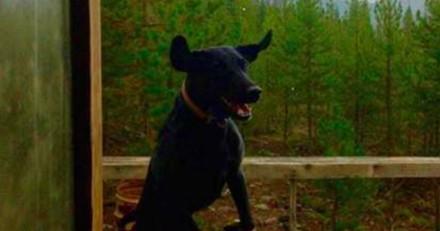 Ce chien a une réaction géniale quand il arrive chez le vétérinaire (Vidéo)