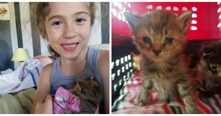 Déprimée après le départ d'un chaton, cette fillette a la plus belle des surprises (Vidéo)