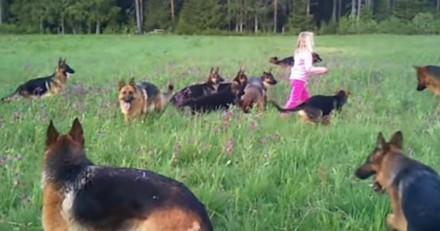Il voit une fillette au milieu de 14 Bergers Allemands, ce qu'elle fait ensuite le laisse sans voix (Vidéo)