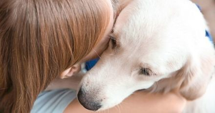 Chiens d'assistance judiciaire : un colloque sur la formation de ces chiens extraordinaires !