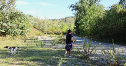 Une petite fille de 4 ans et son chien se perdent dans les bois : la réaction du toutou est exceptionnelle