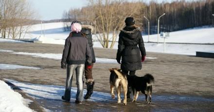 Alertés par des aboiements, des enfants suivent des chiens : par terre, ils découvrent l'horreur absolue